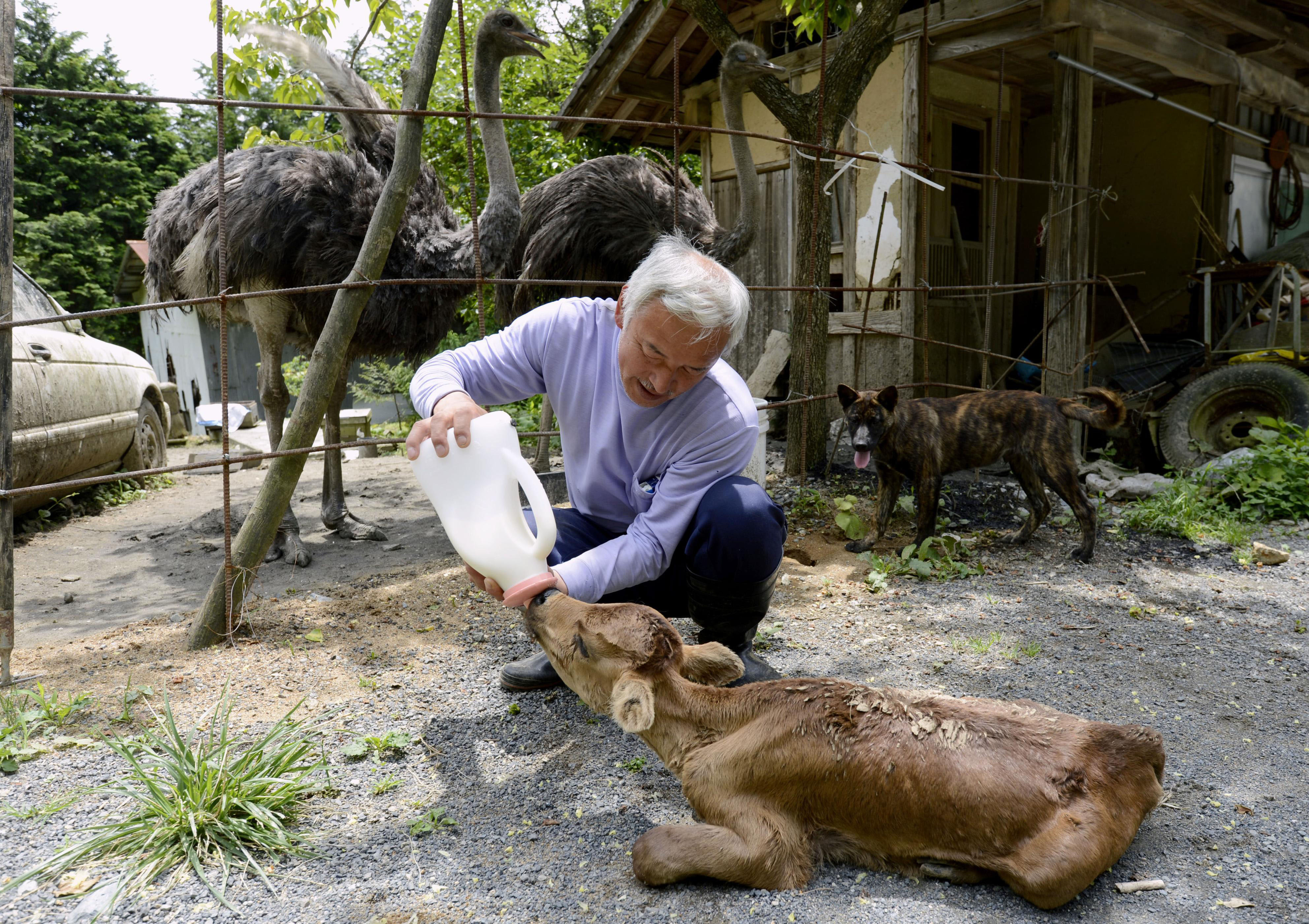National Animal of Japan http://www.japantimes.co.jp/news/2012/08/08/national/have-mercy-on-the-animals/