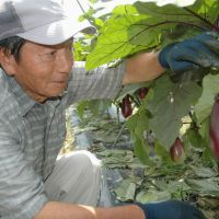 Retirees find new life farming Toyota fields