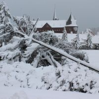 Lines down: A utility pole and tree lie together Tuesday during a heavy snowstorm in Noboribetsu, Hokkaido. | KYODO