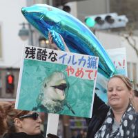Support for whaling outweighs opposition: animal rights survey