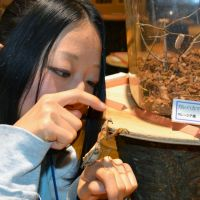 Bugging out: Yuriko Atsumi, an official with the Omurasaki Center in Hokuto, Yamanashi Prefecture, touches a mantis at the center on Nov. 7. | KYODO