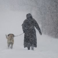 Duty calls: A woman walks her dog along a country road near Montreal on  Thursday. | AP