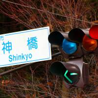 The Japanese traffic light blues: Stop on red, go on what?