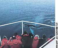 A humpback whale cruises around a ship in Antarctic waters as the whale-watchers on board look on with awe and delight.
