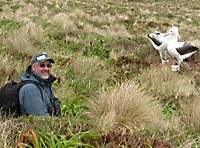MB eyed by albatrosses on Campbell Island