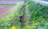 A farmer weeds by hand rather than using herbicides (above); raking over sun-drying buckwheat.