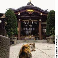 A real-life feline guarding the entrance to Shirahige Shrine .