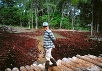 Our woodsman Mr. Matsuki on a new bridge we built in our woods' water garden in October 2004, with other views (below) of its waterways, ponds and falls just after clearance and construction was completed. | C.W. NICOL PHOTOS