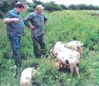 Farmer Julian hasler shows me some of the free-range Gloucester Old Spot pigs he raises in as organic a way as is feasible on his Great Larkhill Farm outside Tetbury in southwest England. Their meat has proved so popular that just one local butcher now takes 200 animals a year. | PHOTOS (c) CELT 21