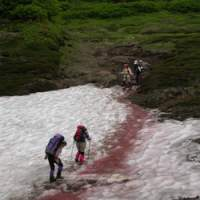 Hikers cross 'watermelon snow' in Hokkaido, caused by the presence of an algae rich in carotenoid pigment. | PHOTOS (C) IMAGES OF JAPAN