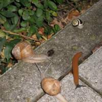 Slugs and snails set to feast on the dead. | PHOTO (C) IMAGES OF JAPAN