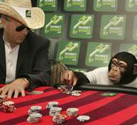 Don't trust the creatures of the animal kingdom, such as Mikey the poker player (above), to have the same sense of fairness usually characteristic of human beings. | AP PHOTO