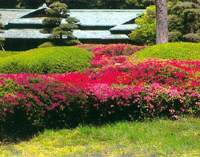 Azaleas in the Imperial Palace East Garden. | MICHIRU UNAE PHOTOS COURTESY OF KODANSHA INTERNATIONAL