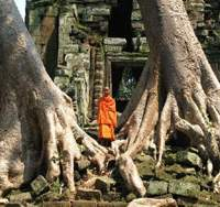A monk outside an ancient temple is framed by enormous kapok trees.