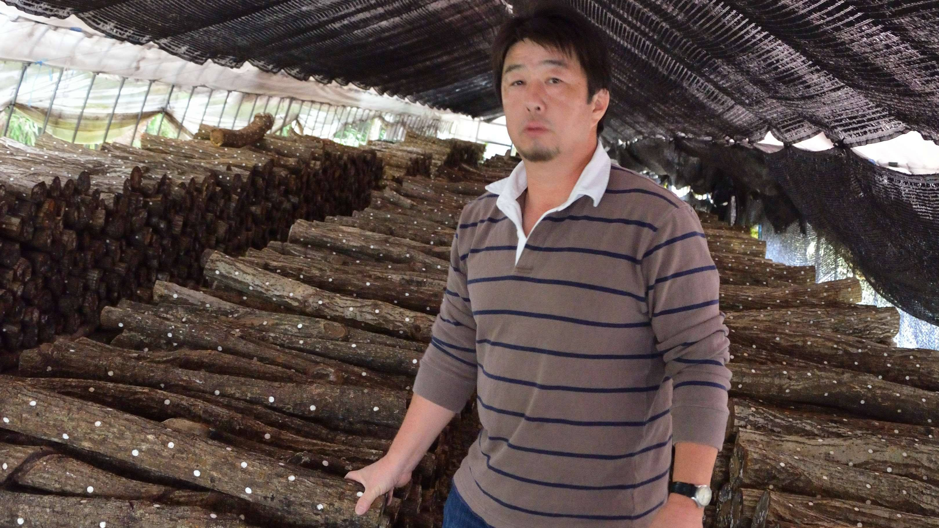 Cut up: Blighted Tochigi Prefecture mushroom farmer Yuji Hoshino with some of the 30,000 logs studded with pegs inoculated with shiitake spores that he must now dispose of because they have been exposed to radioactive rain. | WINIFRED BIRD PHOTO