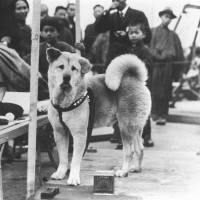 Loyal to the end: If he lived today, Hachiko's chances of surviving long on the streets of Shibuya would be very slim, especially if he was picked up by the Tokyo government's animal control division. | KYODO