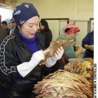 A lady labels crabs at Karo Port.