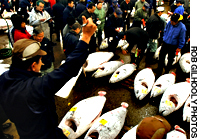 Tsukiji auctions begin at 4:30 a.m., when some 400 varieties of fish and seafood are bartered for at Tsukiji's 20 auction pits. Beforehand, tuna are lined up in rows for wholesalers to inspect.