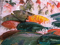 The markets of Ishigakijima Island feature a rich variety of fish from its semitropical waters (above); an exotic dragon motif adorns Gongen-do Shrine