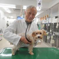 Now exhale: Gen Kato, CEO and director of Daktari Animal Hospital Angell Memorial International, examines a dog in his hospital last October. | YOSHIAKI MIURA