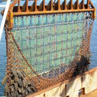 Net loss: Scallop dredges plow through the seabed, taking or breaking nearly everything in their path. What can't be sold &#8212; baby fish, little crabs, skate, monkfish and smashed shells &#8212; still dies, making it an extremely wasteful way to harvest scallops. | NOAA