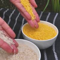 Will new 'golden rice' revolutionize the world?