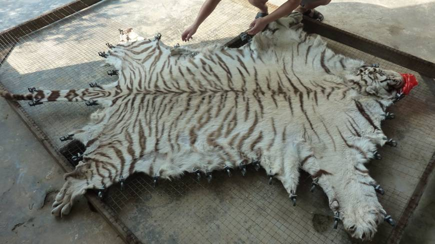 Blood trades: An image of farmed a Chinese tiger-parts product from the report 'Hidden in Plain Sight' (EIA, 2013).