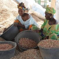 Going nuts: Women sort peanuts at a Chinese-owned warehouse in the central Senegalese village of Dinguiraye. | AFP-JIJI