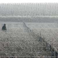 Warming is redrawing the wine map