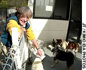 Elizabeth Oliver, head of the nonprofit organization Animal Refuge Kansai, plays with some of the dogs sheltered at its facility in the town of Nose, Osaka Prefecture.