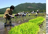 Shiga town offers city-slickers way to taste farm life, work firsthand