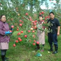 Hisanobu Katayama, 45, director of Katayama Ringo Co. based in Hirosaki, Aomori Prefecture, and workers at his orchard show off their apples.