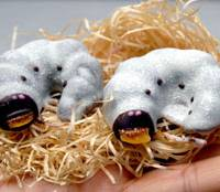 Realistic chocolate beetle larvae have recently become best-selling products of Akita-based confectioner Komatsuya Honten. | YOSHIAKI MIURA PHOTO