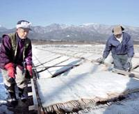 Labor of love: Toshifusa Ogasawara (left), president of Ogasawara Inc., dries agar in Inadani, Nagano Prefecture, in February to produce filiform agar. | KYODO PHOTO