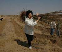 Mother reforesting in China to fulfill late son's wish