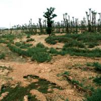 Land woes taking a back seat to CO2