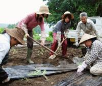 Personal growth: Tomoko Takahashi (third from right) tills the earth alongside farmer Noriko Kawai (right) in Nasu, Tochigi Prefecture, in July. | KYODO PHOTO