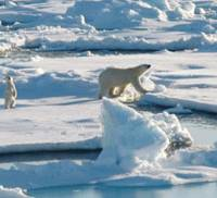 Japan faces pressure to stop importing polar bear products