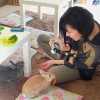Down the rabbit hole: A customer makes new friends during a visit to the Ra.a.g.f rabbit cafe Jan. 31 in Meguro Ward, Tokyo. | KYODO