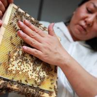 Pesticides linked to bee colony collapse