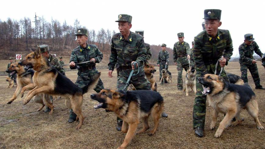 North Korean military dog handlers take part in a drill Saturday.