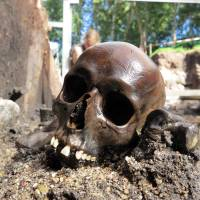 Boneyard: Among the remains found at an archeological site in what is now Aiken, Denmark, is a skull from early Roman Empire times. | EJVIND HERTZ / SKANDERBORG MUSEUM