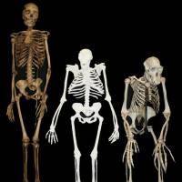 Distant cousin: A composite reconstruction of early human ancestor Australopithecus sediba by the University of the Witwatersrand. | AFP-JIJI