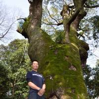 Arborist Jin Kobayashi at the city's Tsuhiko Shrine by a kusu (camphor tree) over 1,000 years old. | WINIFRED BIRD