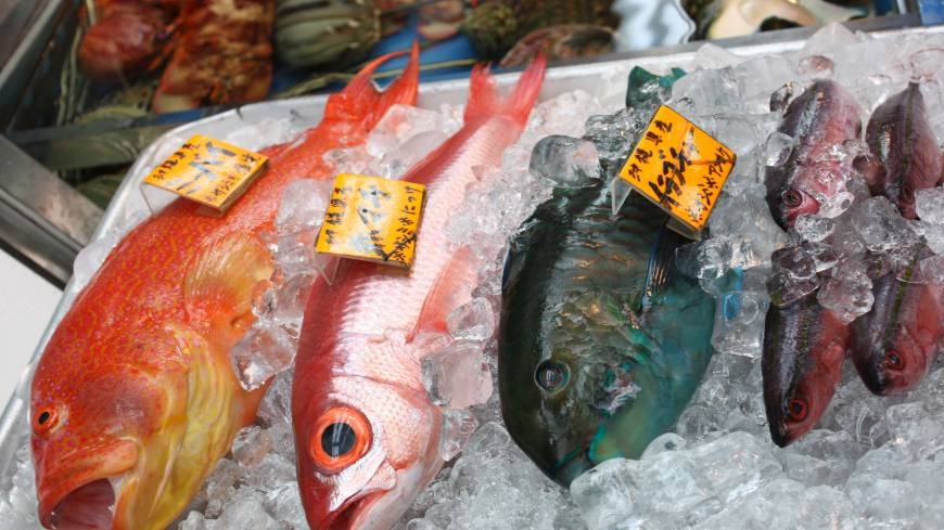 Sea bounty: An Okinawan grouper, a red snapper and a parrotfish await buyers at Naha Municipal Fish Market.