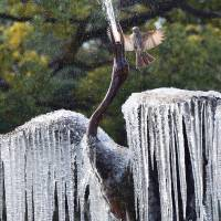 Frozen in time: A bird flies over a fountain featuring a sculpture of a crane with icicles hanging from its wings at a park in Tokyo on Thursday. A cold snap sent temperatures plummeting to their lowest levels this winter across Japan. | AFP-JIJI