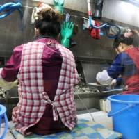 Learning valuable skills: Chinese trainees work at an oyster-processing plant in Edajima, Hiroshima Prefecture, in March. | KYODO