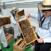 Apiary central: Kajima Corp. employees check the beehives on the Yaesu Book Center's roof in Tokyo on Tuesday. | YOSHIAKI MIURA
