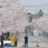 No joy: A fence prevents visitors from entering the Yonomori distrct in Tomioka, Fukushima Prefecture, to view the popular cherry blossoms on April 6. | KYODO