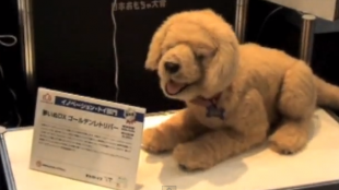 [VIDEO] International Tokyo Toy Show 2008